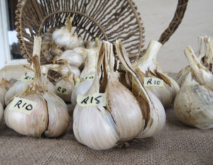 Garlic for sale at the Easter market